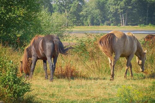 Wilde paarden omgeving Leveroy
